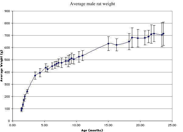 male rat weight