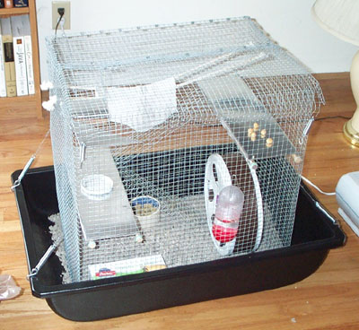 Rat Cage Directions