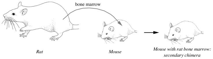 How do mice reproduce?